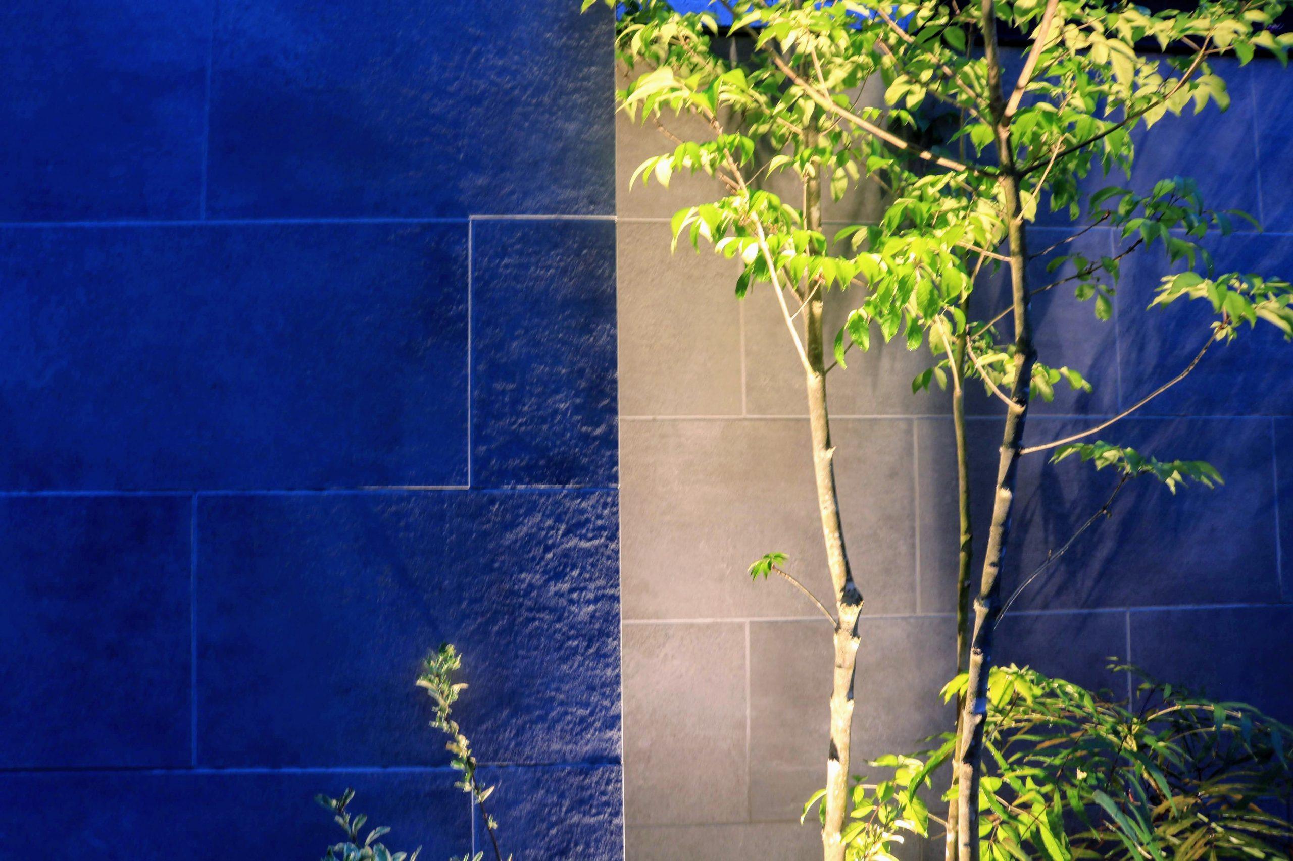 アオダモとタイル張り門壁